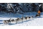 chiens-neige-costette
