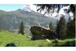 campas-cadets1-jab-suisse-montagne